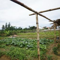 Thanh Dong organic farm 9