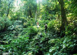 Băng qua rừng sâu trong tour trekking