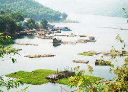 Cá lồng xóm Mực, xã Tiền Phong