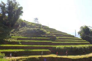 Terraces (1)