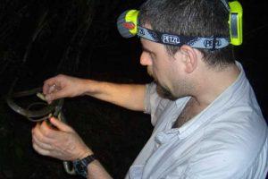 Wildlife exploration at night 2