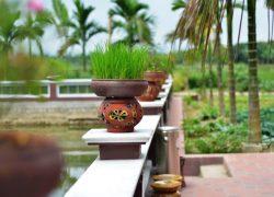 viet-house-in-yen-duc-village---garden_30199649153_o
