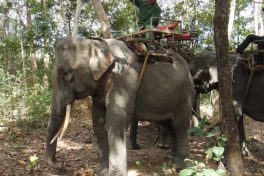 Back in time in the Village of Elephants (Ban Don village)