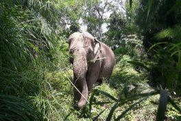 Befriend with Elephants in Yok Don NP