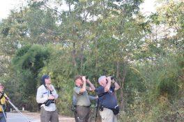 Bird watching in Yok Don National Park